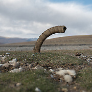 """An ibex horn, used as tether for horses and yaks. Life in Baiqara, a Wakhi High pasture inhabited for about 6 months of the year, from May until October. Guiding and photographing Paul Salopek while trekking with 2 donkeys across the """"Roof of the World"""", through the Afghan Pamir and Hindukush mountains, into Pakistan and the Karakoram mountains of the Greater Western Himalaya."""