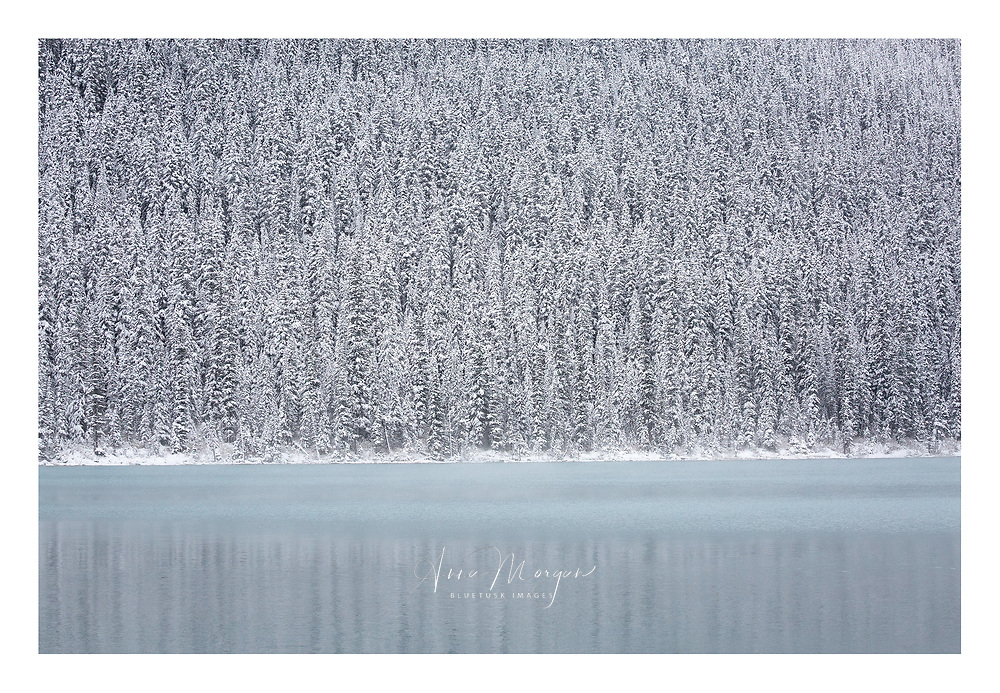 Quiet reflections on snowy mountains at Lake Louise in the Canadian Rockies