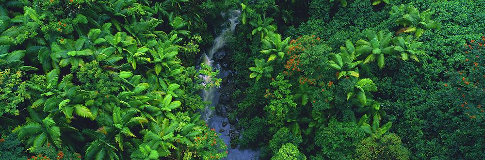 Hamakua Coast, Island of Hawaii, Hawaii, USA<br />