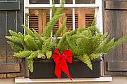 Christmas bow on a Myers Fern in Savannah, GA.