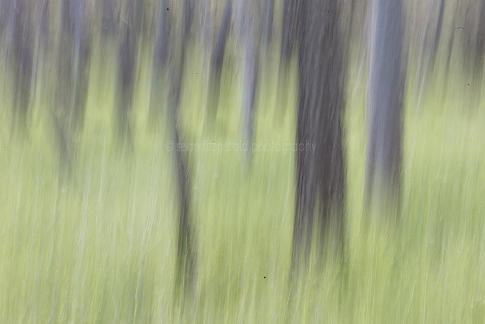 Trees and grasses, Texas Buckeye Trail, Great Trinity Forest, Dallas, Texas, USA.