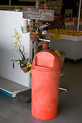 Yellow orchid with orange wastebasket at entrance to Orange Blossom Groves produce shop.  Seminole Tampa Bay Area Florida USA
