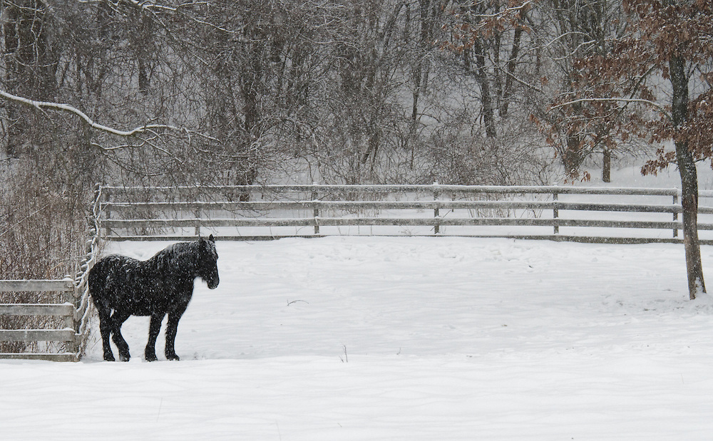 As the snow swirls all around, a single black horse stands guard against the weather.<br /> <br /> Available sizes:<br /> 11x14 print<br /> <br /> See Pricing page for more information.<br /> <br /> Please contact me for custom sizes and print options including canvas wraps, metal prints, assorted paper options, etc. <br /> <br /> I enjoy working with buyers to help them with all their home and commercial wall art needs.