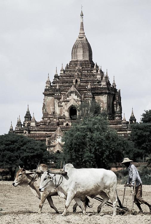 Bagan (Pagan), Myanmar (Burma) - May 2006<br /> A burmese farmer works in a ranch of Bagan.<br /> Photo: Ezequiel Scagnetti
