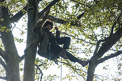 Aylesbury Vale, UK. 1st October, 2020. An anti-HS2 tree protector hangs from a tree during evictions by National Eviction Team bailiffs working on behalf of HS2 Ltd from a wildlife protection camp in the ancient woodland which inspired Roald Dahl's Fantastic Mr Fox at Jones' Hill Wood. Around 40 environmental activists and local residents, some of whom in tree houses, were present during the evictions at Jones' Hill Wood which had served as one of several protest camps set up along the route of the £106bn HS2 high-speed rail link in order to resist the controversial infrastructure project.