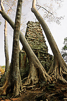 Preah Palilay, is surrounded by trees and roots that cannot be removed as it would cause severe damage to the entire structure as they have become so much a part of the whole.