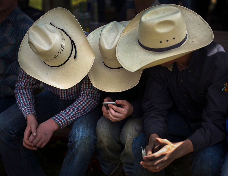 Young cowboys watch a video on an iPhone during Falkland Stampede in Falkland, BC.  (2017)