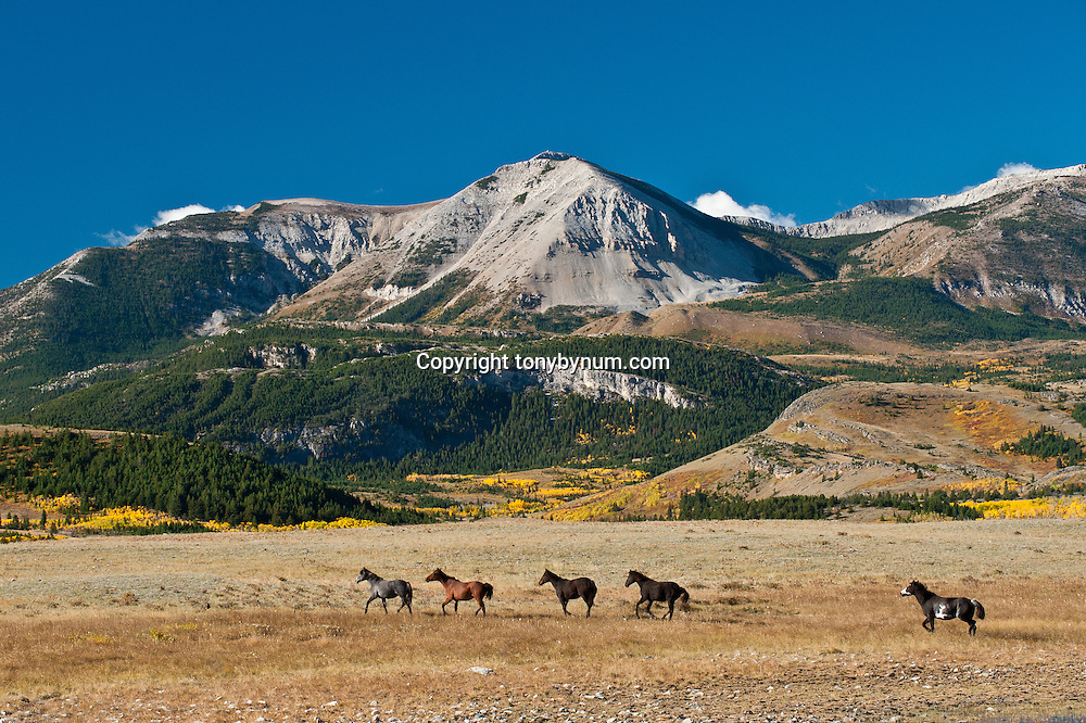 , russel country, montana, usa, russell badger two medicine area of the rocky mountain front, montana, rocky mountains