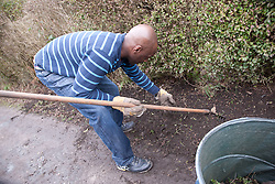 Man weeding hedgerow on an allotment.