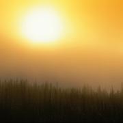 A warm summer sun rises slowly on a foggy morning in Jasper National Park, Alberta, Canada.