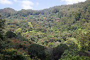 Forested mountains with original rainforest in the highlands of Sri Lanka, Asia