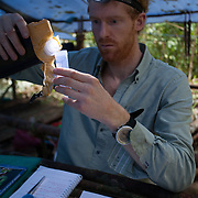 A young male scientist prepares a specimin of a draco lizard in a field camp in the rainforest