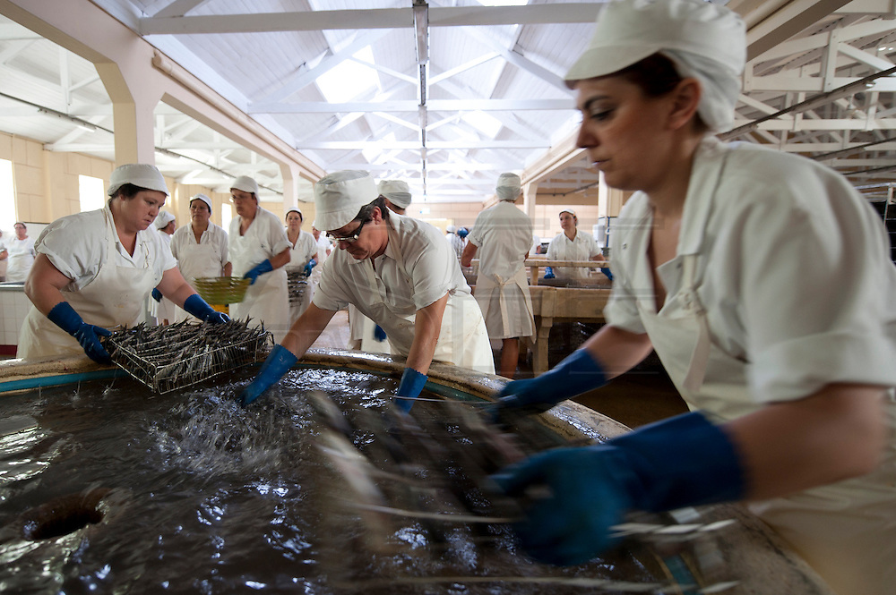 After been cleaned the sardines are washed. In this factory there are 160 workers, 150 are women. The canned Sardine industry is suffering due to the economical crisis.