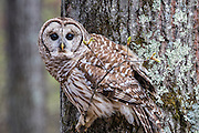 We actually shot this in New Hampshire on the way to visit my aunt, uncle, and cousins for a quick hello. This beautiful owl wa sliterlaly three blocks from their house. it was so nice to sit still for us that I had to include its portrait here. On to the next park!