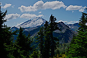 Pine forest and Mt. Baker, Cascade Mountains, NW Washington state