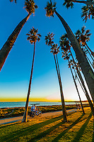 Tourists pedaling a surrey on a path between Cabrillo Boulevard and East Beach, Santa Barbara, California USA.