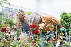 Mature couple smelling rose in plant nursery, Augsburg, Bavaria, Germany