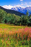 Wildflowers, Verbier, Switzerland