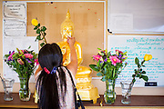 """11 MARCH 2012 - CHANDLER, AZ:      A woman rubs gold leaf on a Buddha statue before Makha Bucha services at Wat Pa in Chandler, AZ, Sunday. Magha Puja (also spelled Makha Bucha) Day marks the day 2,500 years ago that 1,250 Sangha came spontaneously to see the Buddha who preached to them on the full moon. All of them were """"Arhantas"""" or Enlightened Ones who had been personally ordained by the Buddha. The Buddha gave them the principles of Buddhism, called """"The Ovadhapatimokha."""" Those principles are: to cease from all evil, to do what is good, and to cleanse one's mind. It is one of the most important holy days in the Theravada Buddhist tradition. At the temple, people participate in the """"Tum Boon"""" (making merit by listening to the monk's preaching and giving a donation to the temple), the """"Rub Sil"""" (keeping of the Five Precepts including the abstinence from alcohol and other immoral acts) and the """"Tuk Bard"""" (offering food to the monks in their alms bowls). It is a day for veneration of the Buddha and his teachings. It's a legal holiday in Thailand, Laos, Cambodia and Myanmar (Burma).   PHOTO BY JACK KURTZ"""