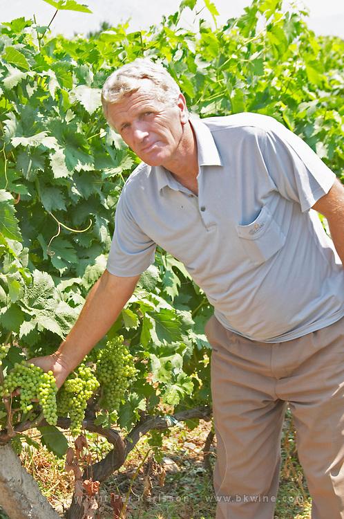Gezim Coku, agronomist and vineyard manager. In the vineyard showing a bunch of grapes. Parellada grape variety (big leaves). Kantina Miqesia or Medaur winery, Koplik. Albania, Balkan, Europe.
