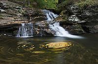 Cascades Ricketts Glen State Park, Pennsylvania