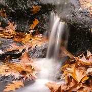 Waterfall and fallen oak leaves