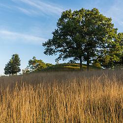 Oak trees on Sagamore Hill in Hamilton, Massachusetts.