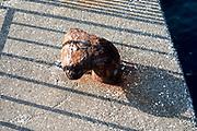 fenced off rusty bollard