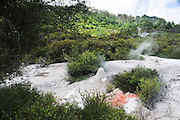 New Zealand, North Island, Rotorua, The Te Puia Geothermal Cultural Experience, Pohutu Geyser