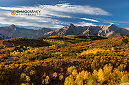 Aspen groves in autumn at Dallas Divide in the Uncompahgre National Forest, Colorado, USA