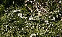 04.05.2014 Katy Rybackie woj pomorskie Rezerwat Kormoranow i Czapli Siwej w Katach Rybackich to najwieksza kolonia legowa tych ptakow w Polsce oraz jedna z wiekszych w Europie, jest tam ponad 11 tys gniazd tych ptakow N/z zniszczone odchodami ptakow drzewa i roslinnosc fot Michal Kosc / AGENCJA WSCHOD