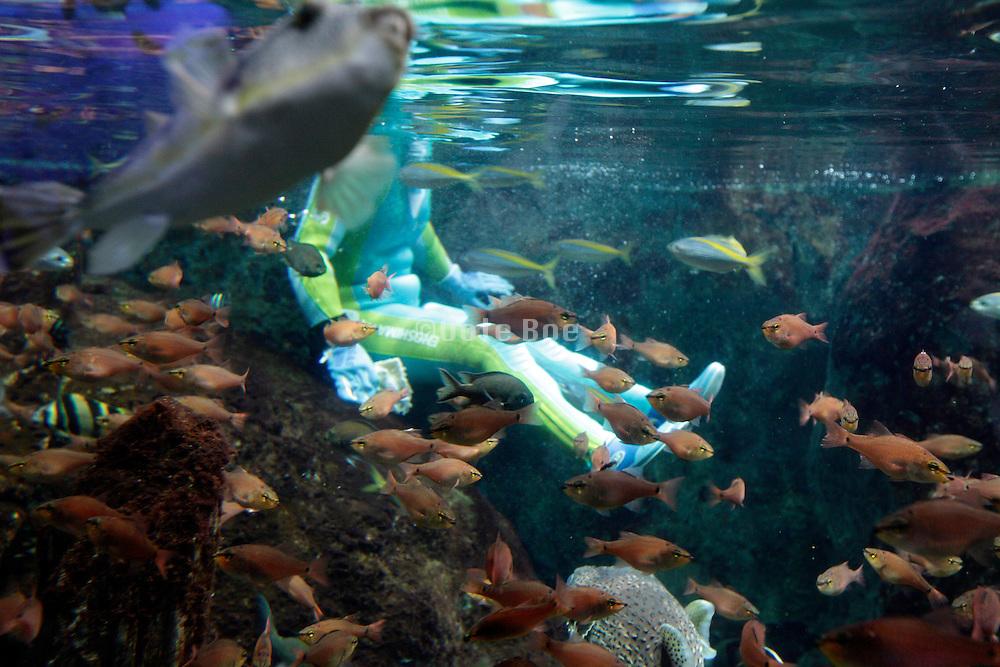 scuba diver sitting inside a large aquarium