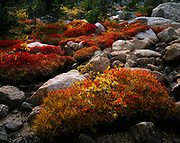 Autumn colors of sedges, willows and blueberries along the shore of Lonesome Lake, Cirque of the Towers, Wind River Range, Popo Agie Wilderness, Shoshone National Forest, Wyoming.