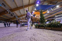 Overzicht<br /> KWPN Hengstenkeuring 2021<br /> © Hippo Foto - Dirk Caremans<br />  02/02/2021