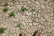 Nederland, Sambeek, 3-6-2020 Gebarsten kleigrond rond Oeffelt in het Maasheggengebied .Foto: Flip Franssen