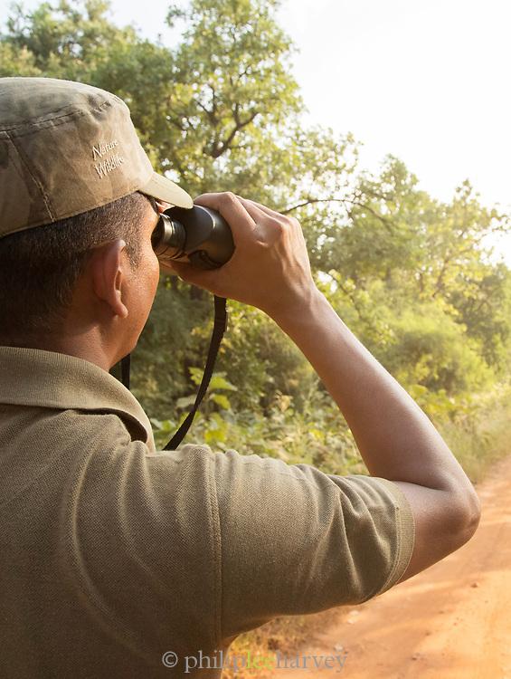 Safari guide looking for tigers, Tadoba National Park, India