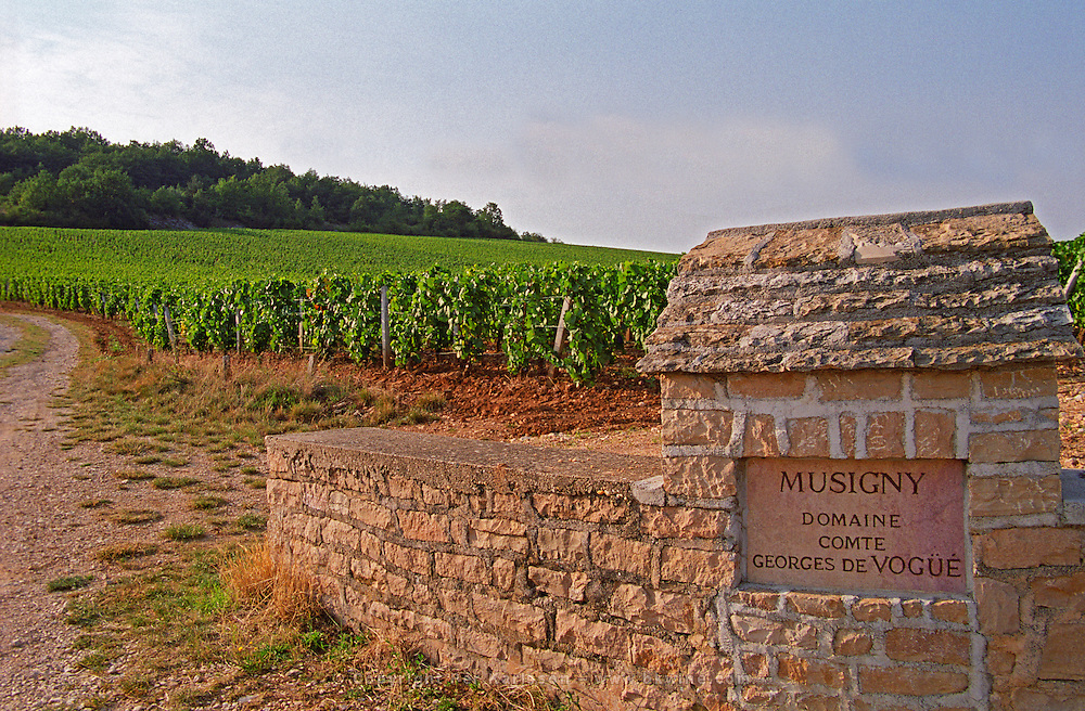 Stone wall and sign in the vineyard (Petit) Musigny: Domaine Comte Georges de Vogue