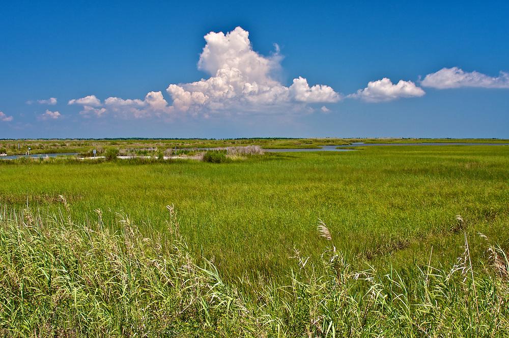 Endless Wetlands, Cameron Parish, LA