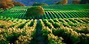 Photographic art and designs of vineyards in California's wine country.