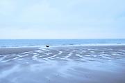 Hond rent langs de zee op het Zuiderstrand, Den Haag | Dog runs along the sea at South beach, The Hague