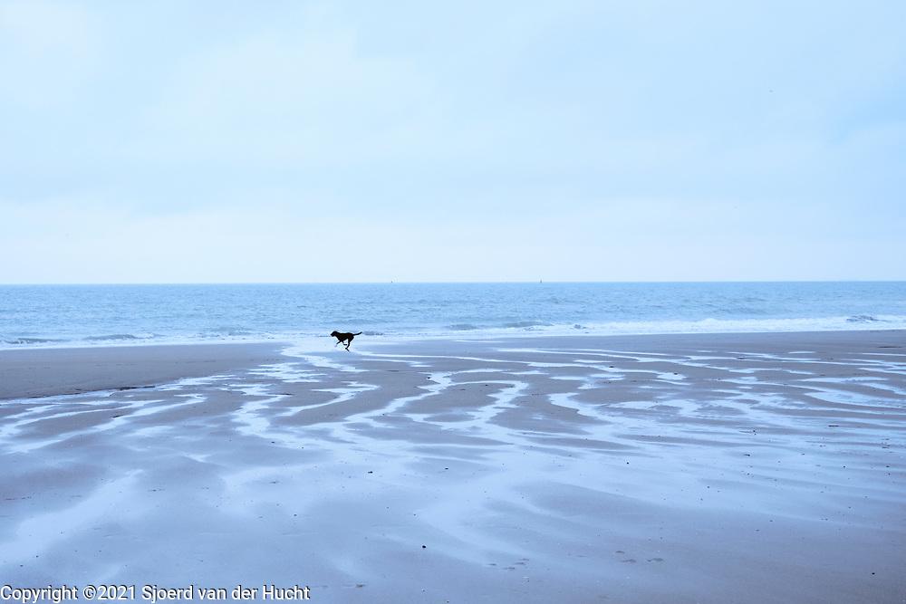 Hond rent langs de zee op het Zuiderstrand, Den Haag   Dog runs along the sea at South beach, The Hague