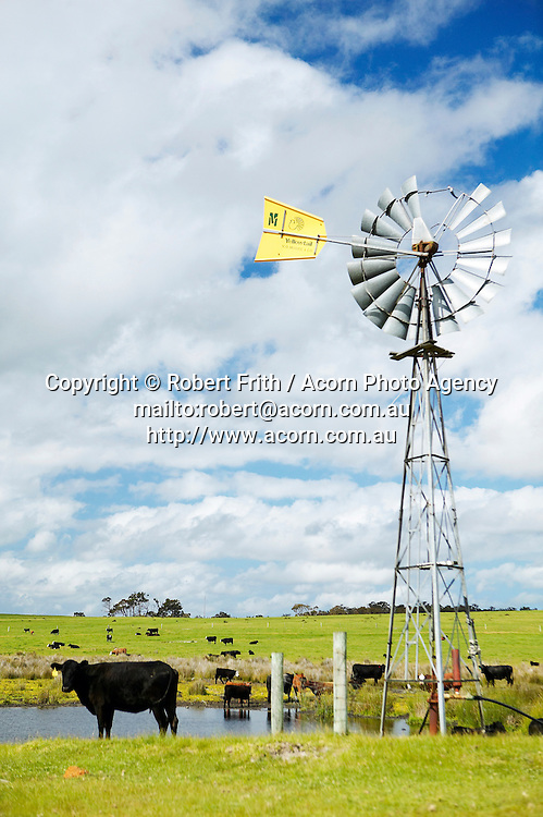 Windmill and cattle on Chester Pass Road