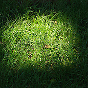 A circle of light hitting the beautifully manicured lawn