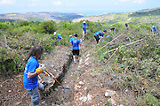 Israel, Mount Carmel, Massada on the Carmel a strong hold built by the Jewish settlement in 1942 in anticipation of a German invasion of Palestine. Intel Volunteers clear forest overgrowth from the site