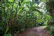 Torch Ginger, Senator Fong's Plantation Garden