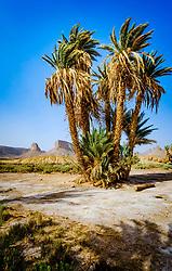 An Oasis in the Moroccan desert near Foum Zguid.<br /> <br /> (c) Andrew Wilson   Edinburgh Elite media