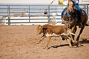 November 2, 2008 -- PHOENIX, AZ: Calf roping at the Arizona High School Rodeo at the Arizona State Fair in Phoenix. Teams from across the state participate. The Arizona High School Rodeo Association sponsors a full season of high school rodeo that culminate in a championship rodeo in June.  Photo by Jack Kurtz / ZUMA Press