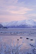 Alaska.  Weak winter light illuminates a peak in the Chugach Mountains. Chunks of sea ice float in the waters of Turnagain Arm.  This area is surrounded by the Chugach National Forest.    Black spruce tree ( Picea mariana) in foreground.