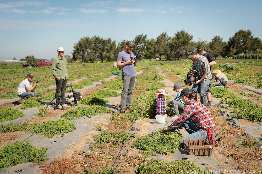Victor Cortez and his family harvest Mexican Sour Gherkins on his small farm as part of the ALBA program in Salinas, CA while being filmed for a short documentary on organic farming.