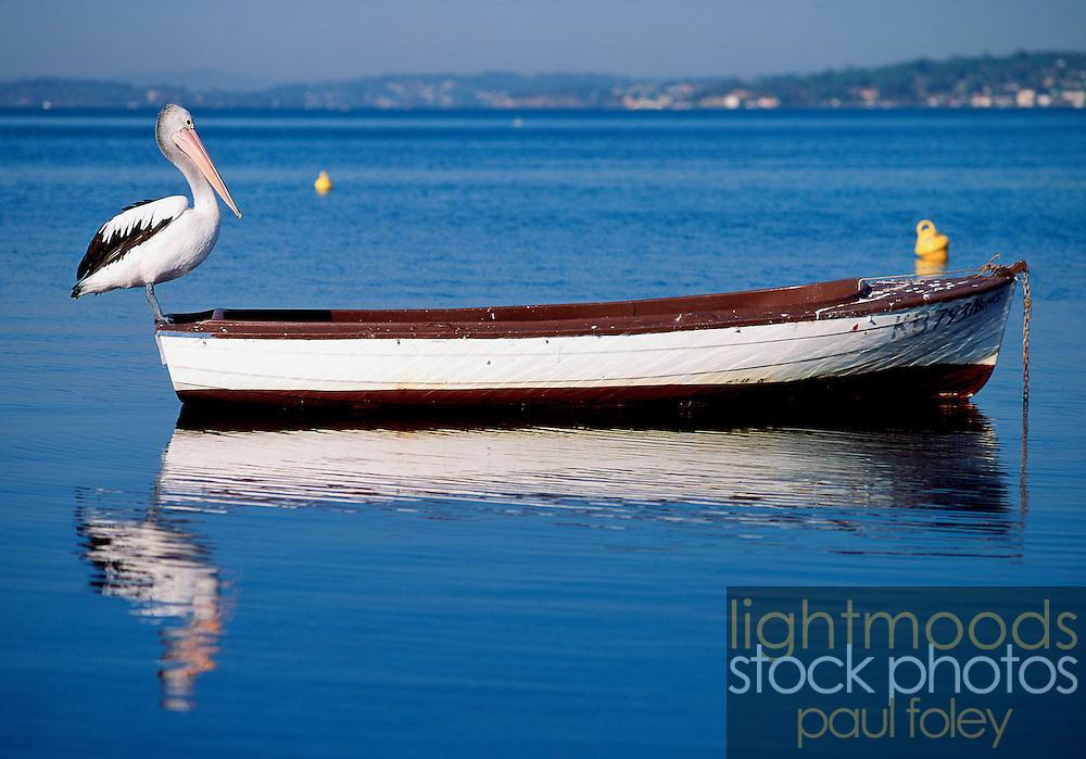 Pelican & Fishing Boat, Belmont, lake Macquarie